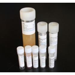 Dendritic Cell Medium Kit