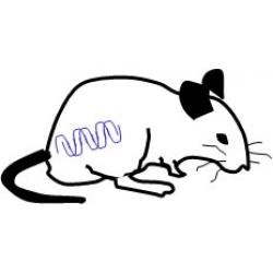 Rat Tissues & Organs - List